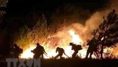 Bùng phát nhiều điểm cháy rừng tại Nghệ An, Hà Tĩnh và Thừa Thiên-Huế