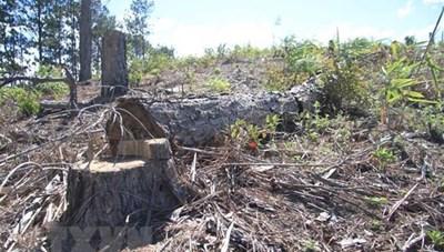 Bắt nhóm đối tượng phá rừng tại thành phố Đà Lạt