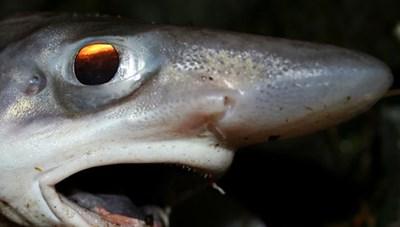 [ẢNH] Góc nhìn khác về thế giới của các sinh vật trên thế giới