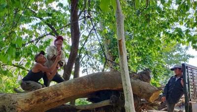 'Đi kiểm tra phá rừng quên mang bút kiểm đếm, đánh dấu!'