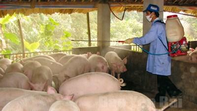 Rà soát, phòng ngừa dịch bệnh cho đàn vật nuôi