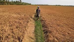 Trà Vinh: Trên 17 tỷ đồng hỗ trợ giống vật nuôi cho nông dân