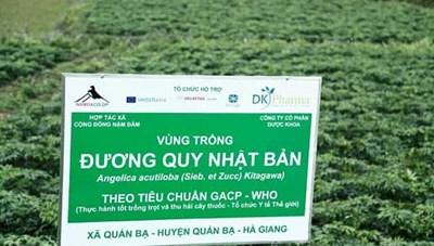 Bảo tồn cây thuốc quý gắn với phát triển kinh tế