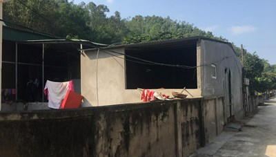 Trại bò trong khu dân cư gây ô nhiễm