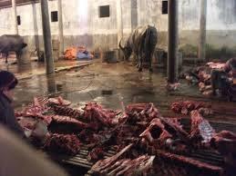 Quảng Nam: Liên tiếp phát hiện các cơ sở giết mổ bơm nước vào bò