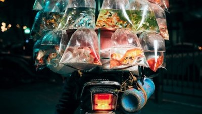 Ảnh chụp Hà Nội giành giải thưởng nhiếp ảnh uy tín Mỹ