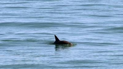 Cá heo chết trôi dạt vào bờ