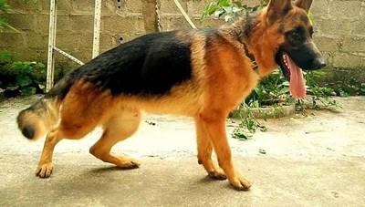 Đắk Lắk: Bị chó cắn nhưng không tiêm phòng dại, cháu bé 9 tuổi tử vong