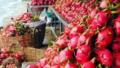 Bình Thuận: Giá thanh long xuống thấp kỷ lục