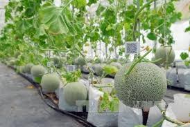 Hà Nội: Khuyến khích doanh nghiệp đầu tư vào nông nghiệp công nghệ cao