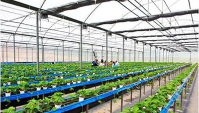 Hà Nội quy hoạch khu sản xuất nông nghiệp công nghệ cao