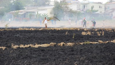 Khu dân cư hoảng loạn vì đám cháy do đốt rơm rạ