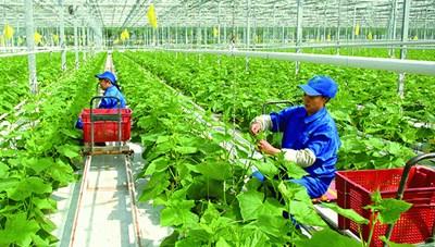 Nan giải thu hút FDI vào nông nghiệp công nghệ cao