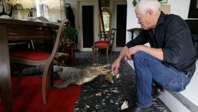 Người đàn ông chia nhà cho cá sấu, rắn chuông