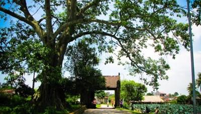 Nỗ lực bảo tồn làng Việt