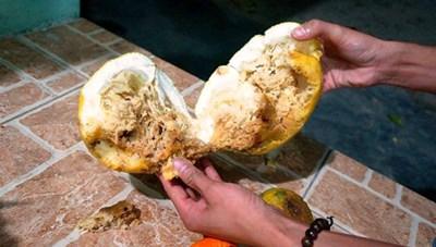 Hết giòi trong trái cây đến đỉa ngoe nguẩy trong bánh đậu xanh?