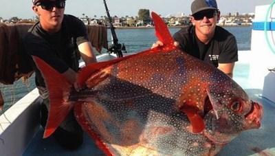 Tìm thấy loài cá 'máu nóng' đầu tiên ở California