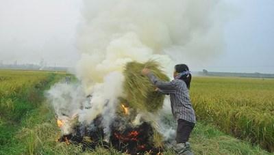 Vận động người dân không đốt rơm rạ tại đồng ruộng