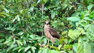 Nhiều động vật quý hiếm được thả về rừng tự nhiên