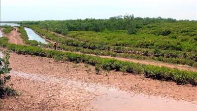 Thái Bình: Thành lập Khu bảo tồn thiên nhiên đất ngập nước Thái Thụy