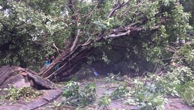 Thừa Thiên-Huế: 24 người thương vong do bão số 5