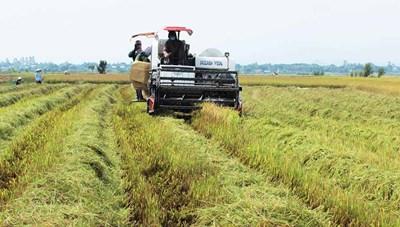 Phú Thiện (Gia Lai): Gắn tái cơ cấu nông nghiệp với xây dựng nông thôn mới