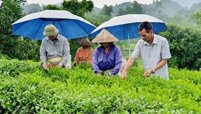Chi Lăng (Lạng Sơn): Vốn ưu đãi tiếp sức người dân thoát nghèo