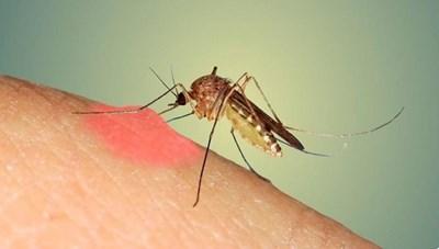 12 tỉnh/thành phố ghi nhận số ca mắc sốt xuất huyết tăng cao