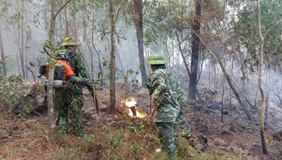 Nghệ An: Lại xảy ra cháy rừng ở Diễn Châu