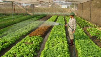 Hà Nội: Phấn đấu đạt 100% số xã hoàn thành nông thôn mới vào năm 2021