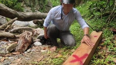 Quảng Ngãi: Yêu cầu xử lý khai thác gỗ trái phép ở huyện Ba Tơ