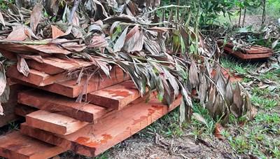 Quảng Nam: Yêu cầu điều tra vụ phá rừng ở tiểu khu 720