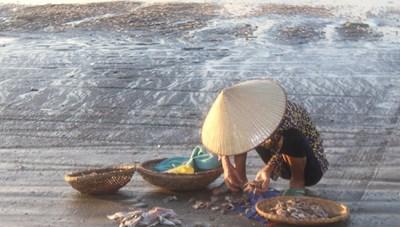 [ẢNH] Ngư dân Thanh Hóa đánh bắt hải sản từ 22h đêm để tránh nắng