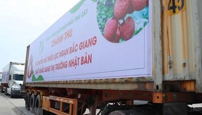 Lần đầu tiên vải thiều Việt Nam 'cập bến' thị trường Nhật Bản
