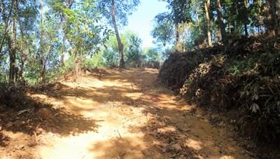 Quảng Nam: Ai cho phép mở đường khai thác gỗ trong rừng phòng hộ?