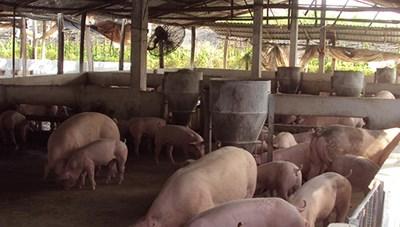 'Học sinh vừa ngồi học vừa phải bịt mũi': Yêu cầu công ty chăn nuôi khắc phục