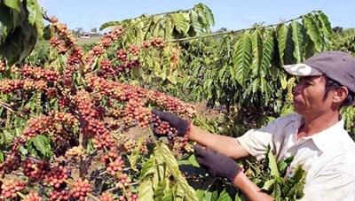 Nông sản xuất khẩu cần tuân thủ quy định về truy xuất nguồn gốc