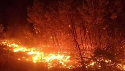 Liên tiếp cháy rừng tại huyện Diễn Châu