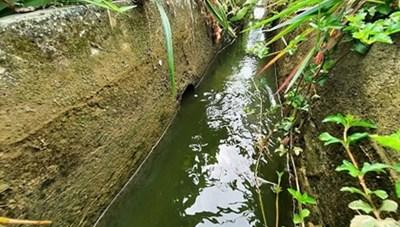 Quảng Nam: Khốn khổ vì trang trại nuôi gà gây ô nhiễm