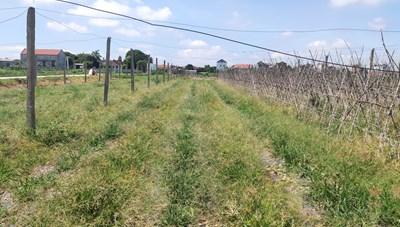 Ninh Bình:  Phá sản một dự án nông nghiệp công nghệ cao