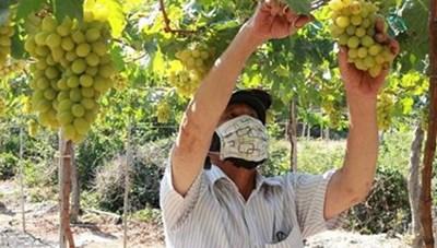 Thuận Nam (Ninh Thuận): Nông dân thi đua sản xuất, kinh doanh giỏi