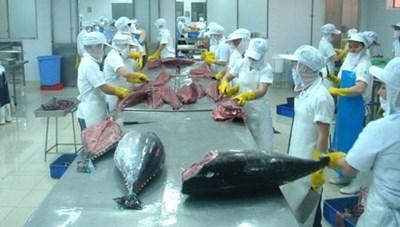 Xuất khẩu tôm, cá ngừ vào EU tăng nhanh