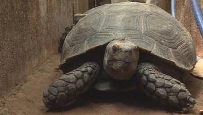 Khởi tố người đàn ông nuôi hơn 100 cá thể rùa quý hiếm