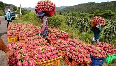 Nhiều mặt hàng nông sản chuẩn bị sang EU