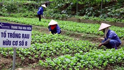 Nông nghiệp hữu cơ trước cơ hội mới