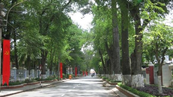 Những con đường màu xanh
