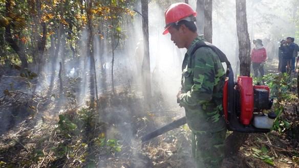 Cháy rừng gia tăng