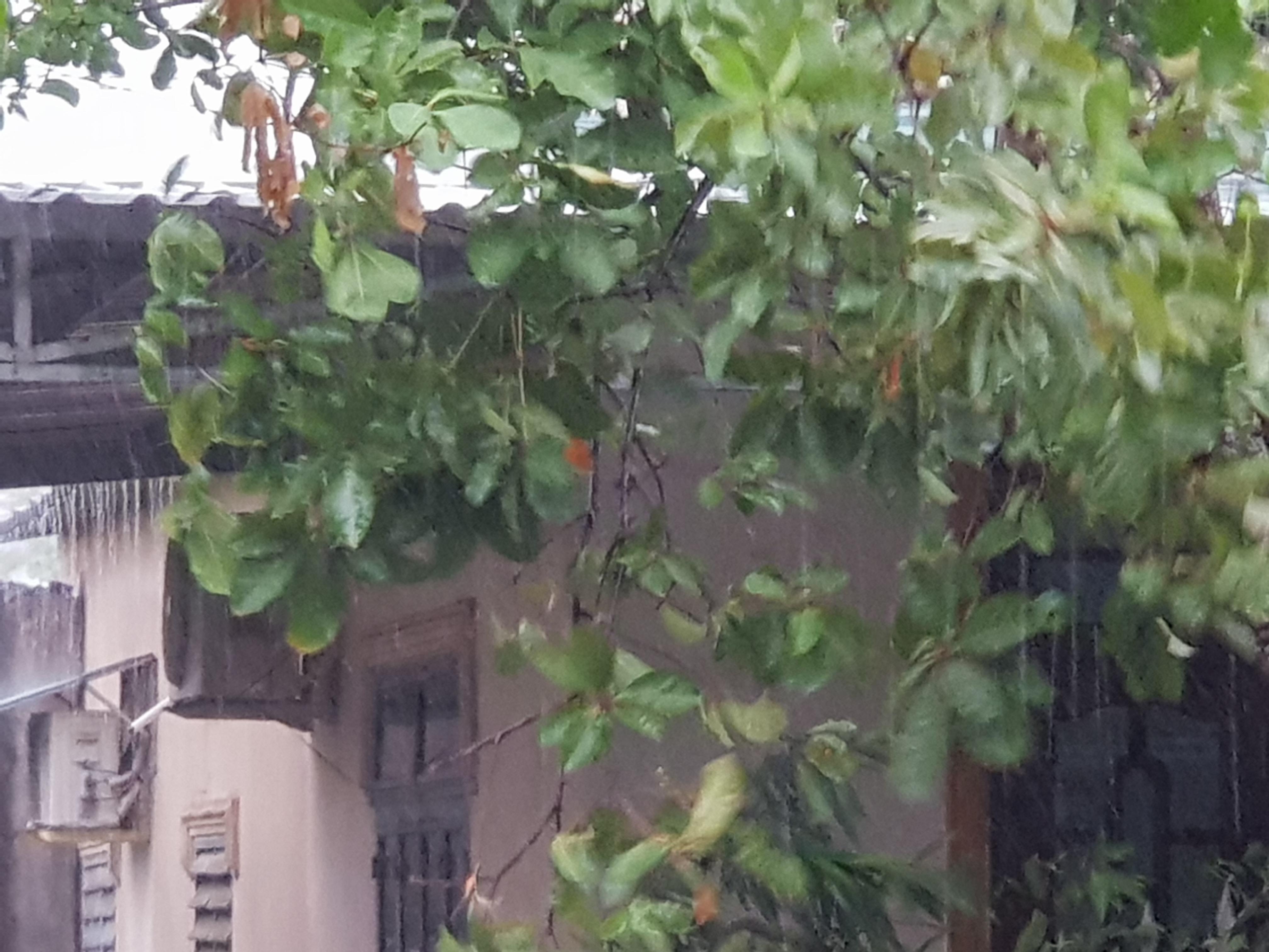 Quảng Trị bắt đầu xuất hiện mưa to và gió.