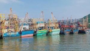 Bảo hiểm cho tàu 67 tại Bình Định: Vẫn 'bóng chim tăm cá'
