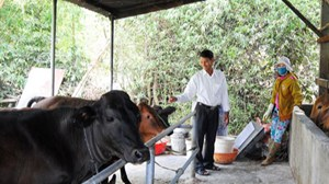 Bình Định: Hỗ trợ hộ nghèo phát triển chăn nuôi, tăng thu nhập